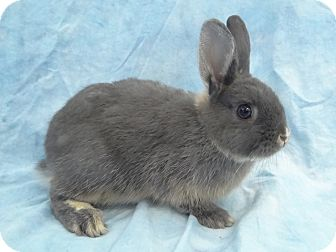 Other/Unknown Mix for adoption in Long Beach, California - Colt