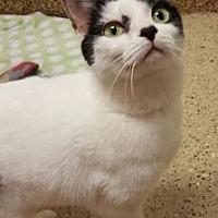 Adopt A Pet :: Elsa - Toledo, OH