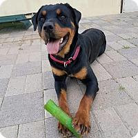 Adopt A Pet :: Denver - Gilbert, AZ