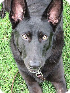 German Shepherd Dog Mix Dog for adoption in Philadelphia, Pennsylvania - Hero