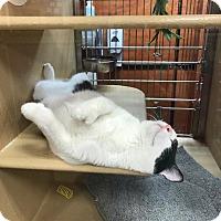 Adopt A Pet :: Elijah Polytoes - McDonough, GA
