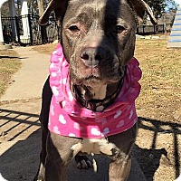 Adopt A Pet :: Talia - Bruce Township, MI