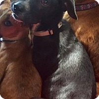Adopt A Pet :: Billy - North Brunswick, NJ