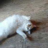 Adopt A Pet :: Abby - Brainardsville, NY
