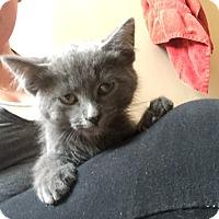 Adopt A Pet :: Church (handsome boy) - Sterling Hgts, MI