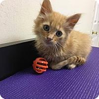Adopt A Pet :: Rufus $75 - Seneca, SC