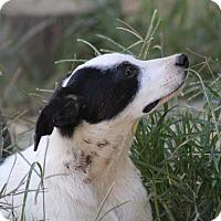 Adopt A Pet :: Noah - Naugatuck, CT