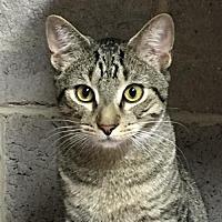 Adopt A Pet :: Jeffrey - Furlong, PA