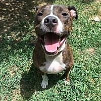 Adopt A Pet :: Keegan - Albemarle, NC