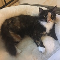 Adopt A Pet :: Holly - Fishers, IN