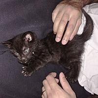 Adopt A Pet :: Conrad - Toronto, ON