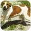 Photo 1 - Coonhound (Unknown Type) Mix Dog for adoption in Gahanna, Ohio - Lucky
