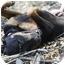 Photo 3 - Rottweiler Dog for adoption in Kaufman, Texas - Roscoe