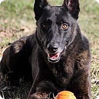 Adopt A Pet :: Charlie in TX - Jamestown, CA
