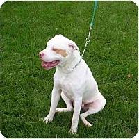 Adopt A Pet :: Babyface - Chicago, IL