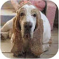 Adopt A Pet :: Bernard - Phoenix, AZ