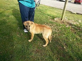 German Shepherd Dog Mix Dog for adoption in Prestonsburg, Kentucky - jimmy