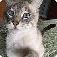 Adopt A Pet :: Handsome Teeko - Davis, CA
