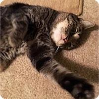 Adopt A Pet :: Linus - Sacramento, CA