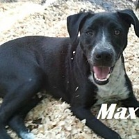 Adopt A Pet :: Max - Beaumont, TX