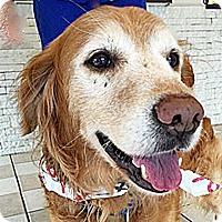 Adopt A Pet :: Aubie - BIRMINGHAM, AL