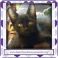 Adopt A Pet :: Logan - Southport, FL