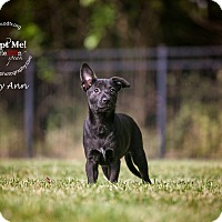 Adopt A Pet :: Mary Ann - Warsaw, IN