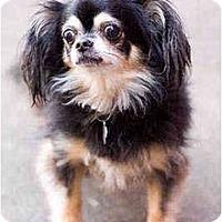 Adopt A Pet :: Mazzy - Portland, OR