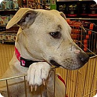 Adopt A Pet :: Bourbon - Silsbee, TX
