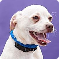Adopt A Pet :: Bruno - Poway, CA
