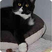 Adopt A Pet :: Picasso - Marietta, GA