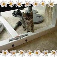 Adopt A Pet :: Glamour Girl - KANSAS, MO