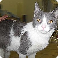 Adopt A Pet :: Rudy - Phoenix, AZ
