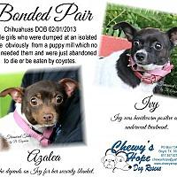 Adopt A Pet :: Azalea - Boyd, TX
