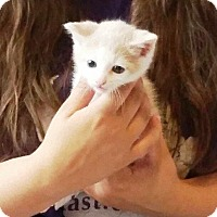 Adopt A Pet :: Mr. Dillo - Putnam, CT