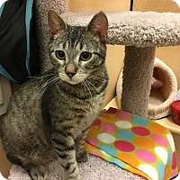 Adopt A Pet :: Cyrus - Foothill Ranch, CA