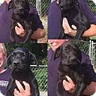 Adopt A Pet :: Black Sweeties 1