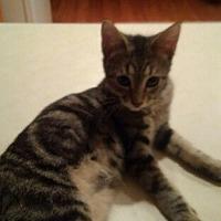 Adopt A Pet :: Reece - Oviedo, FL
