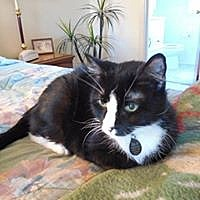 Adopt A Pet :: Charlise - Amherst, NY