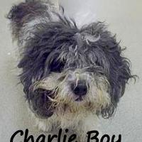 Adopt A Pet :: Charlie - Palm Coast, FL