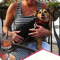 Adopt A Pet :: Lucy - Acworth, GA