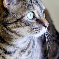 Adopt A Pet :: Sadie - Potsdam, NY