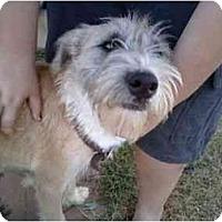 Adopt A Pet :: Milo - Rosenberg, TX