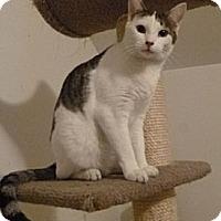Adopt A Pet :: Simon - Kensington, MD
