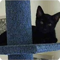 Adopt A Pet :: Twilight - Modesto, CA