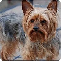 Adopt A Pet :: Loki - Greensboro, NC