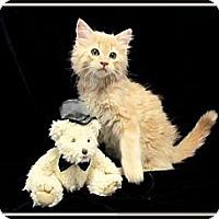 Adopt A Pet :: Sundrop - Orlando, FL