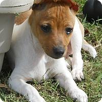 Adopt A Pet :: Krackel - Oklahoma City, OK