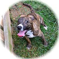Adopt A Pet :: Odessa - Ijamsville, MD