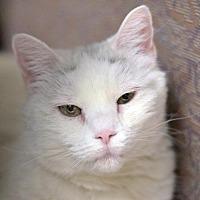 Adopt A Pet :: Dessie - Park City, UT